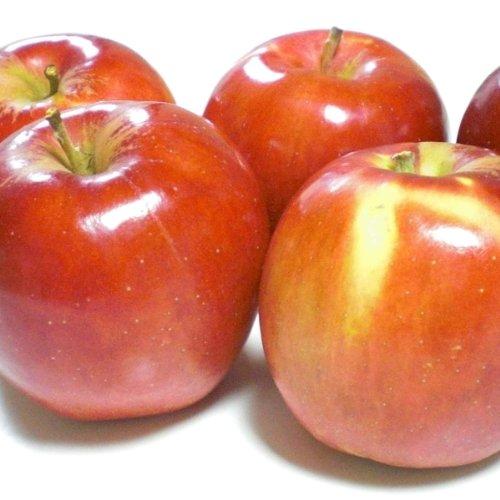 青森県産 紅玉 南部りんご 加工用 訳あり 約5kg