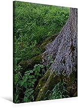 Premium textil kanvas 50 cm x 75 cm hög, september: I skuggan av de starka rötterna blommar så många krus.   Väggbild, bil...