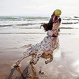 Gelenk-Ergänzungsfutter für Hunde – MaxxiFlex Plus – Hunde Gelenke – Fortschrittliche Formel – Glucosamin HCL, Chondroitin-Sulfat, MSM, Hyaluronsäure, Teufelskralle, Bromelain, Gelbwurz – Linderung Von Arthritisschmerzen – Beste Hüftunterstützung Für Hunde – Hunde-Hüftdysplasie – Alle Rassen Und Größen – 120 Hochwertige Kaubare Tabletten – Geschmacksgarantie - 4
