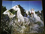 The Purple Cow Steve Bloom - Juego de Mesa de Caballos 3D, Color Blanco