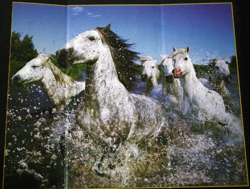 The Purple Cow - 332342 - Puzzle 3D Lenticulaire avec Steve Bloom Images - Les Chevaux Blancs De Camargue - 500 Pièces