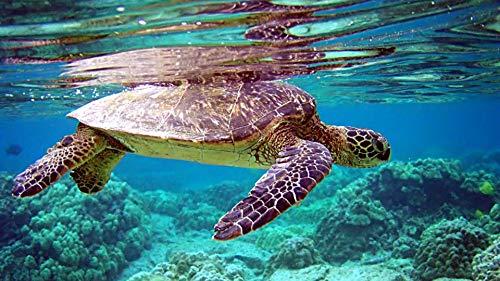 DKISEE Rompecabezas clásico de Tortugas en el mundo submarino de 1000 piezas para adultos, niños y ancianos, ideal como regalo para el hogar, 75 x 50 cm