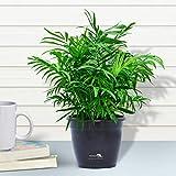 Home-outdoor Indoor Plants