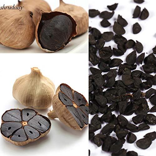 ScoutSeed 100 teile/beutel: Schwarze Knoblauch Samen Reine Natürliche Und Organische Gemüsesamen Gesundes S5DY
