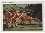 Plateosaurus - Dinosaurs: The Mesozoic Era (Trading Card) # 25 - Redstone Marketing 1993 Mint
