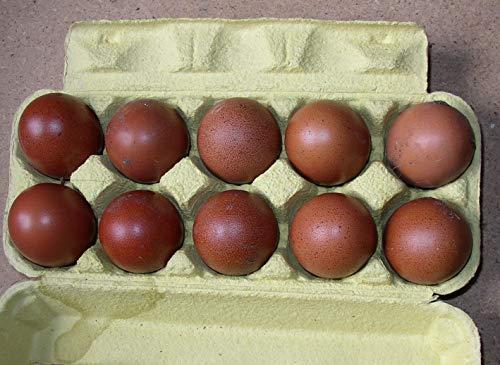 10+2 Hühner-Eier von Marans, dunkelbraun, Freiland Haltung, direkt vom Bauernhof, tages-frische Delikatesse aus der Altmark