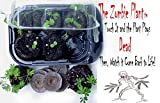 Zombie Plant Grow KIT - (Touch It and It Plays Dead!)- Comes Back to Life in Minutes! Amazing Seed Starter Gift Idea for Plant and or Zombie Lovers of All Ages