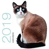 Gatti. Calendario da muro 2019