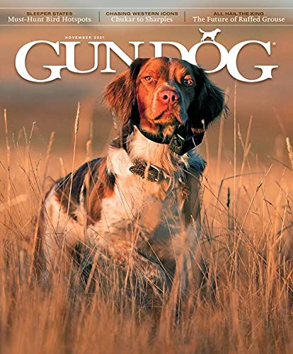 Subscribe to Gun Dog