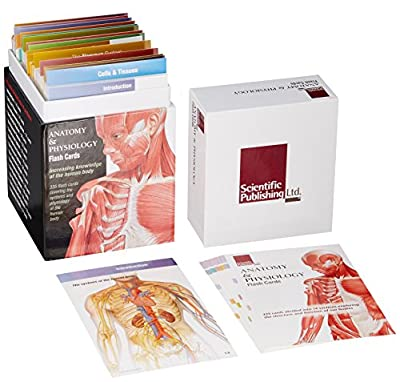 Anatomy and Physiology Flash Cards from Scientific Publishing