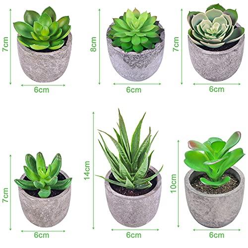 Frasheng Plantas