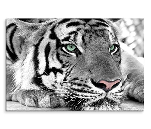 Sinus Art Leinwandbild 90x60cm Künstlerische Fotografie – Weißer Tiger mit grünen Augen