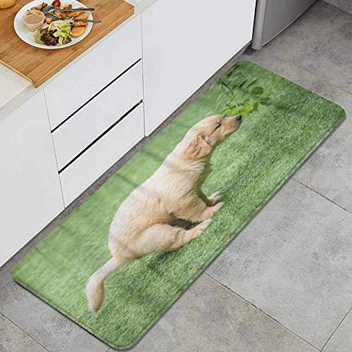 VAMIX Tappeto da Cucina,Cane carino cucciolo di golden retriever che fa la cacca adorabile animale arco canino cucciolo,antiscivolo passatoia da cucina antiscivolo zerbino tappetino per il bagno