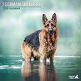 Deutscher Schäferhund Traditioneller 2020 Kalender