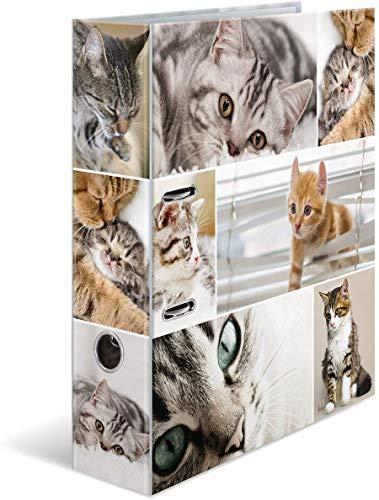 HERMA 7166 Ordner DIN A4 Tiere Animals Katzen, 7 cm breit, stabiler Karton, farbiger Außen- und Innendruck im hochwertigen Design, Ringordner, Aktenordner, Büroordner, Motiv-Ordner