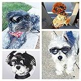 PEDOMUS Hunde Sonnenbrille, wasserdichter Schutz für kleine und mittlere Hunde