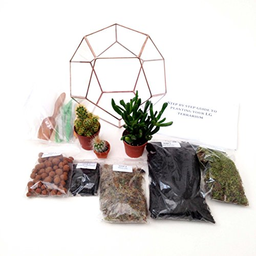 Terrarium Dodécaèdre avec kit de terrarium, plantes/s, outils et guide étape par étape (français non garanti). Emballé en Angleterre (Moyen, patine cuivrée)
