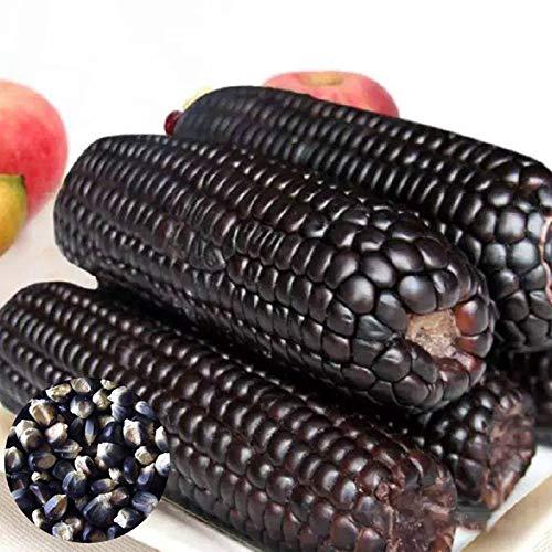 Benoon Semillas De Maíz, 1 Bolsa Semillas De Maíz Semillas De Maíz Ceroso Dulce De Alta Tasa De Germinación Natural Para Invernadero Negro Semillas de maiz