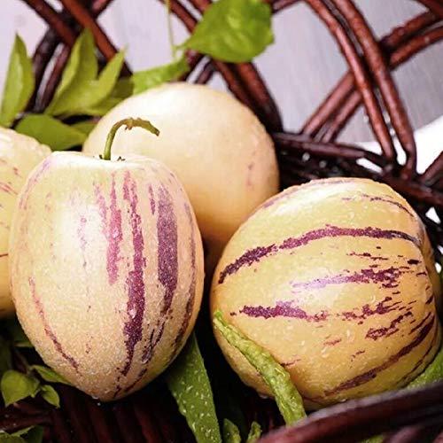 puran 30 Stück/Beutel Pepino Melonensamen, Pflegeleicht, Pflegeleicht, Nahrhaft Muricatum Aiton Samen Ginseng Fruchtsamen Für Den Pepino Melonensamen