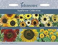 【輸入種子】 Johnsons Seeds Sunflower collection サンフラワー・コレクション ジョンソンズシード