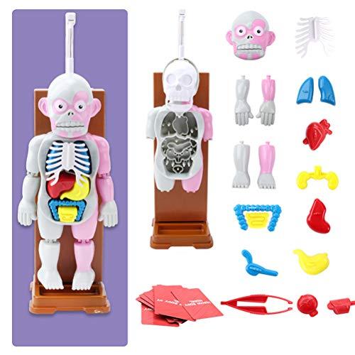 Fovor Funny Tricky Toys, 3D Human Body Model Trick Joke Game Gag Assembled Practical Educational Toy For Kids