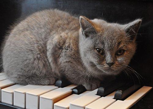 Cat on The Keyboard - Erwachsene Holz Spielzeug Kinder Puzzle DIY Spiels Wohnkultur 1500 Teile Puzzle