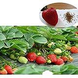 Etophigh 500pcs / Pack, graines de Fraises Kit vivaces Herbes graines de Fruits de Jardin comestibles Decor de Jardin, Disponible à la Fois intérieur et extérieur