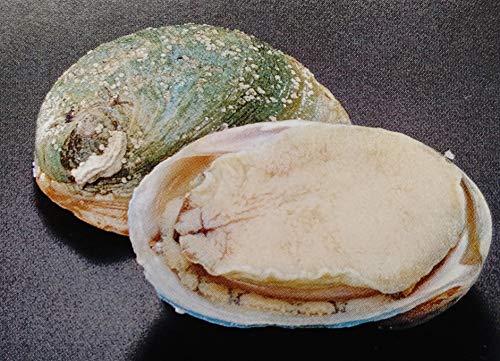 グリーンリップ あわび 殻付き 2L 約1kg(10粒)個91-110g 冷凍 生食可 業務用 エゾ 鮑