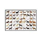 Posters Cuadro de Razas de Perros Lindo Cartel de Arte Animal Impresiones Pintura Cuadros de Pared d...