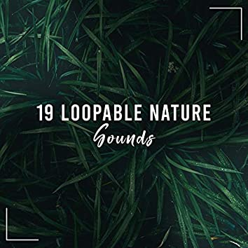 19 Loopable Nature, Rainforest and Ocean Sounds for Sleeping