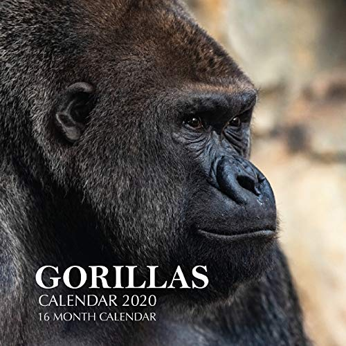 Gorillas Calendar 2020: 16 Month Calendar