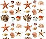 Seashells Wall Stickers 40 Decals Scrapbook Car Truck Sea Shells Ocean Beach