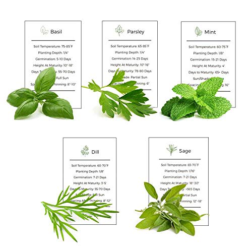 Environet Herb Garden Seeds Collection - 5 Culinary Herb Seeds Pack - Organic...
