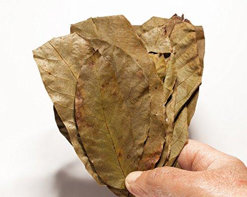 Premium Walnusslaub, 20 Blätter! Laub für das Garnelen, Krebse und Wels Aquarium