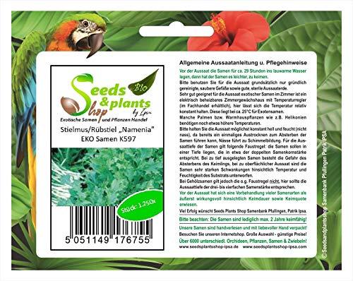 "Stk - 1250x Stielmus Rübstiel "" Namenia "" EKO - Kohlrabi Samen Gemüse K597 - Seeds Plants Shop Samenbank Pfullingen Patrik Ipsa"