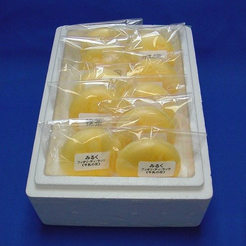 【送料込み】加賀の老舗最中種を使った「もなかアイス」10個セット
