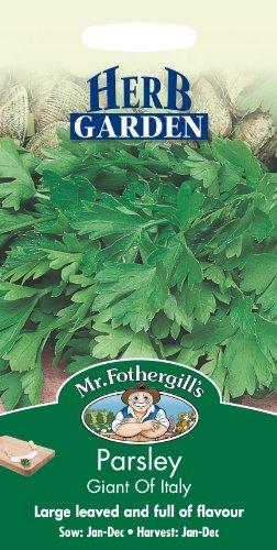 Mr Fothergills???herbes???Persil g?ant d'Italie???750?graines de