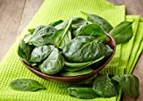 Heirloom Spinach Bloomsdale...image