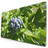 Ahdyr Gaming Mousepad Blueberry Patch Tapis de Souris de Jeu étendu avec Bords Cousus Tapis de Souris Long (29,5 x 15,7 Pouces) Tapis de Bureau Tapis de Clavier Base antidérapante Résistant à l'eau