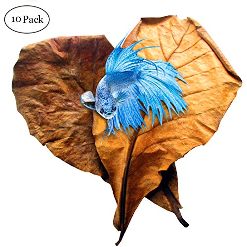 SunGrow Indian Almond Leaves for Betta, 9 Inches Long, Induce Breeding and Boost Immunity, Reduce Stress, No Toxic Chemicals Added, for Playing and Hiding, Easy to Use, 10 Pack