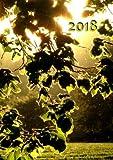 Kalender 2018 - Blätter in der Abendsonne: DIN A5, 1 Woche auf 2 Seiten, Platz für Adressen und Notizen