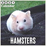 Hamsters 2021 Calendar: Monthly Square Wall Calendar 18 Months