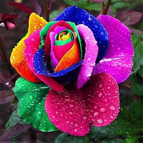 GEOPONICS SEEDS: 100 Stück/bag Rosenbaum, Rosenpflanzen, Bonsai Blumenpflanzen, Rosenbaum Pflanze Balkon & amp; Yard vergossen für Hausgarten: 20