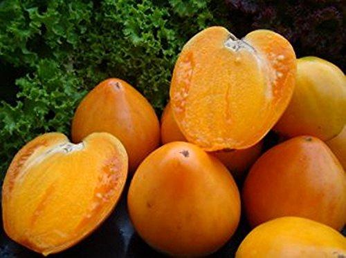 Graines Tomate jaune Serdtse Ashkhabada-Coeur de Ashgabat Heirloom NON-OGM