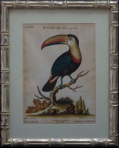 Dósfer 22514 muurschildering Vogels S.XIX, 45 x 56 cm