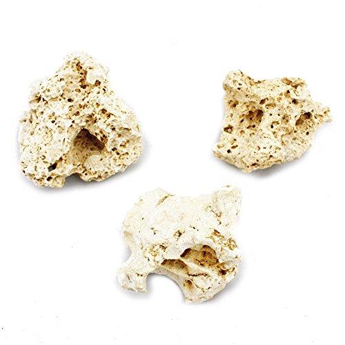Exotenherz - Sansibar Rock Gr. S 7-10 cm 3er Set