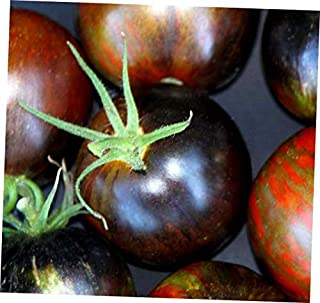 HNM 10 Seeds Cosmic Eclipse Tomato Seeds - LY710