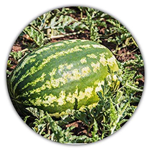 Riesen Wassermelone - ca. 30 Samen - Saftig lecker