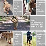 Zoom IMG-2 zeraty dog shoes scarpe da