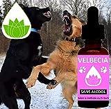Fleurs de Bach Animal agressif (chien, chat.) SANS ALCOOL Velbecia 30 ml – Mélange Fleurs de Bach Original pour accepter la présence d'un autre animal ou d'une autre personne